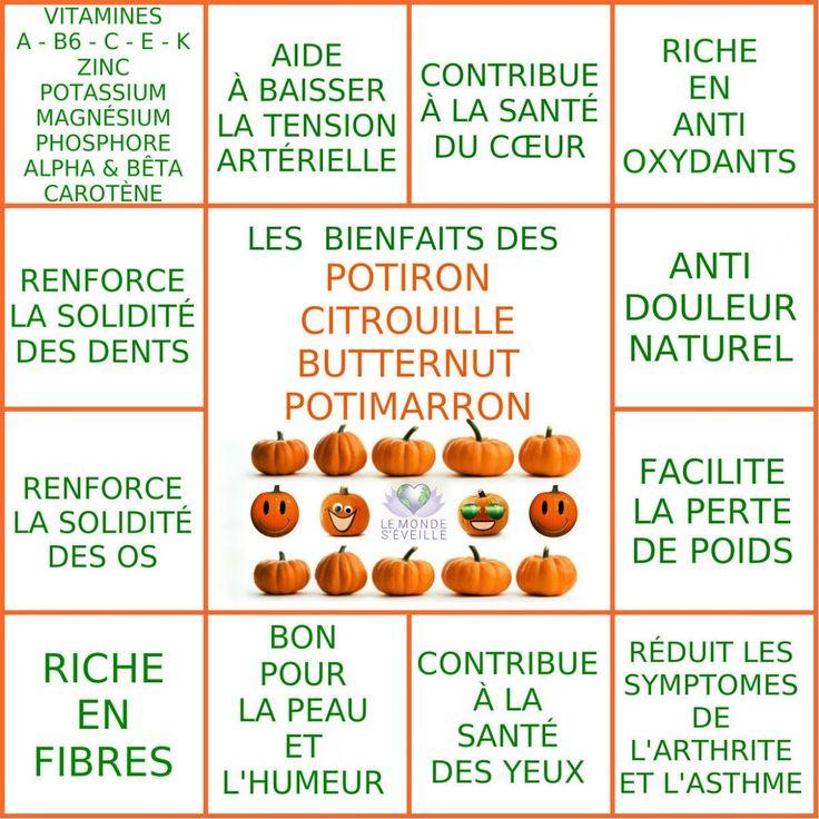 CITROUILLE & POTIRON | Le Monde s'éveille