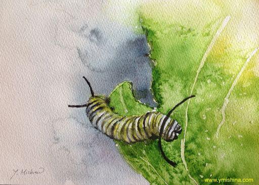 あめりか日記: 2014 Monarch Butterfly ー渡り蝶・モナーキ(邦名:オオカバマダラ)
