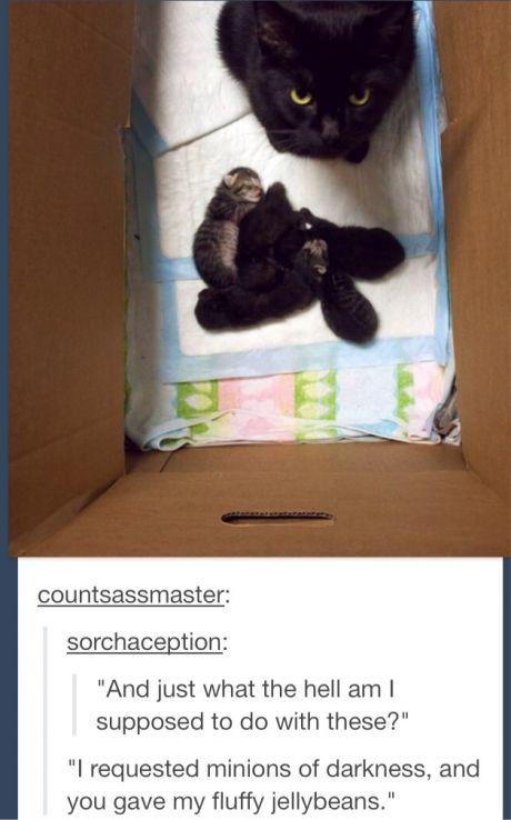 fluffy jellybeans