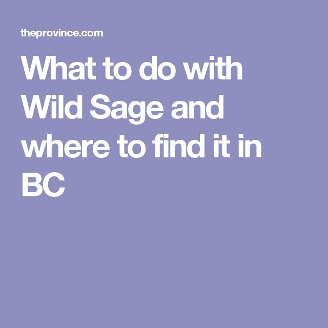 What to do with Wild Sage and where to find it in BC