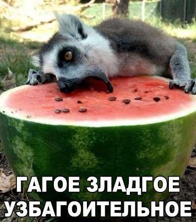 Пин от пользователя Irina500 на доске Анекдоты   Самые ...