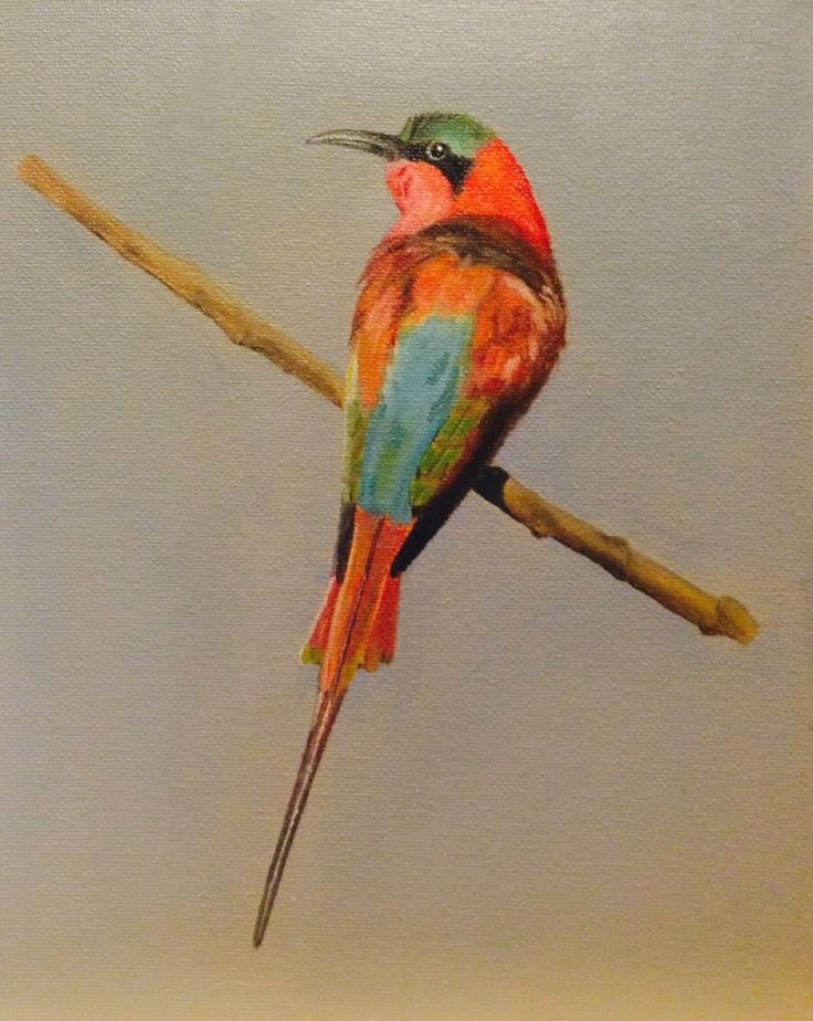 Southern Carmine bee-eater, oil on canvas board