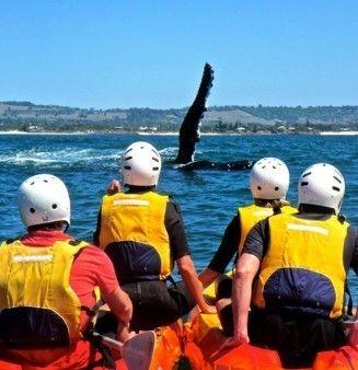 Sea Kayaking in Byron Bay