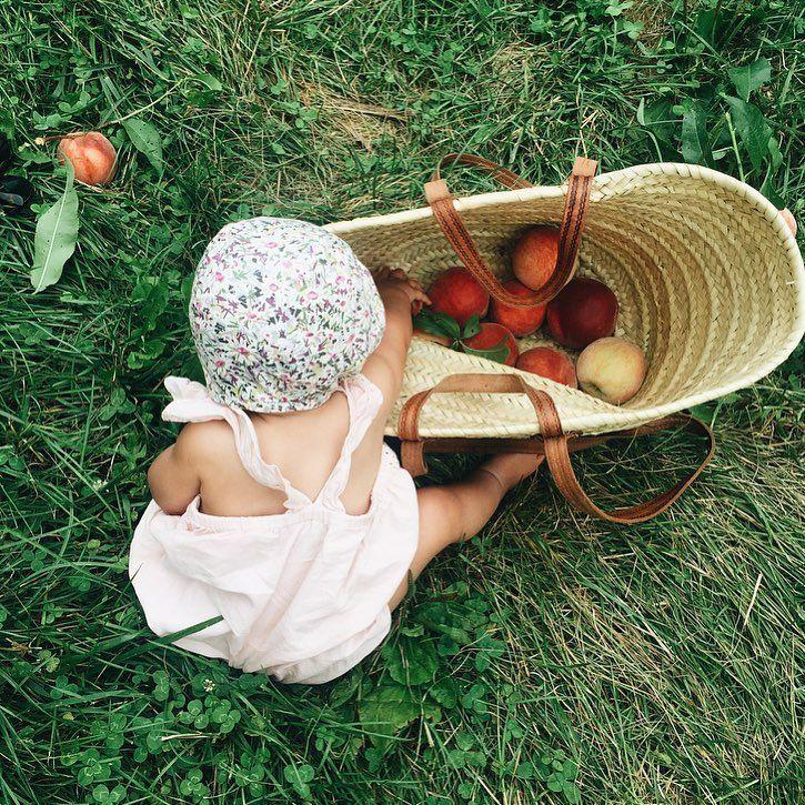 Peach picking.