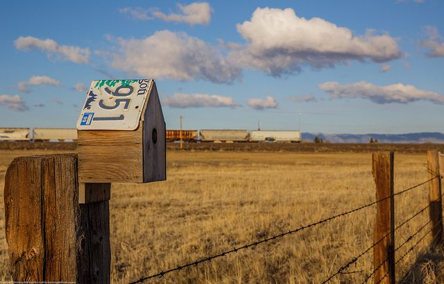 Oregon license plate in Wyoming to make a birdhouse