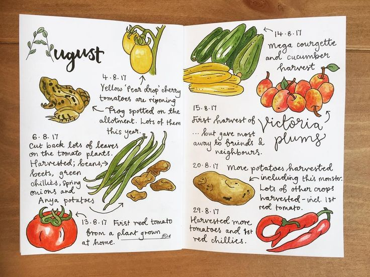 Happy 1st September. Here's how August looked in my allotment journal. Mainly dominated by plums and tomatoes, and an opportunity to draw a frog for the first time. Seems to have been a good year for frogs and toads. I want to draw more critters.