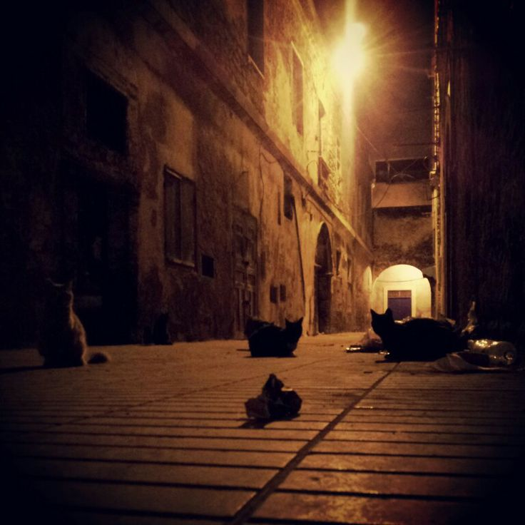 #Maroko, #Marocco, #As-Sawira, #Essaouira, #cats, #night