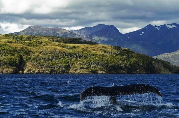 ballena , canales australes , Cabo de Hornos , Cape Horn