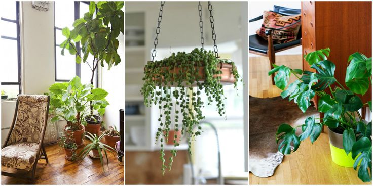 17 Best Ideas About Small Indoor Plants On Pinterest