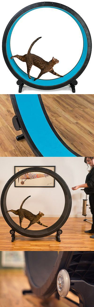 Furniture and Scratchers 20740: Cat Exercise Wheel - Blue -> BUY IT NOW ONLY: $199 on eBay!