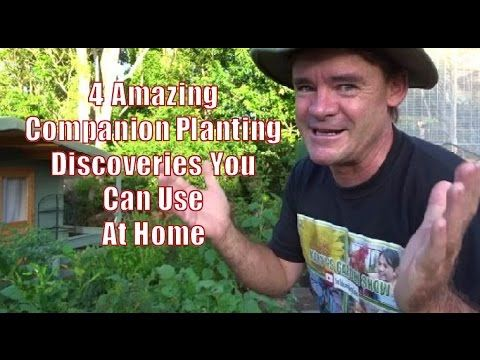4 Amazing Companion Planting Discoveries You Can Use at Home - YouTube