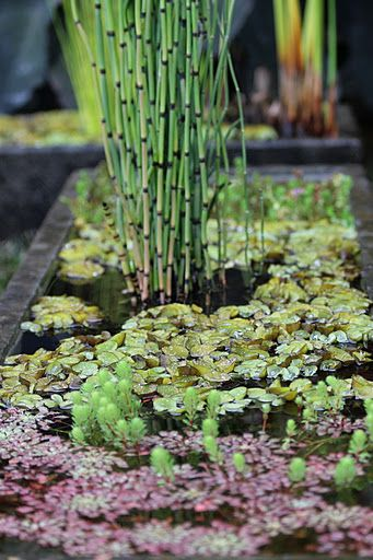 EDIT: Upon A Little Further Investigation, It Looks Like Most Species Of  Horsetail Require A Dormant/winter Period Each Year, So They Probably  Arenu0027t A Good ...