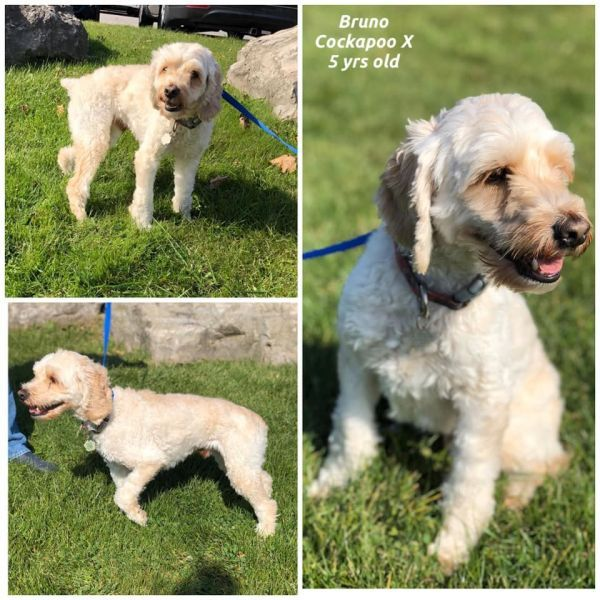 Dogs For Adoption Near Guelph On Petfinder In 2020 Dog Adoption Cute Animal Photos Beautiful Dogs