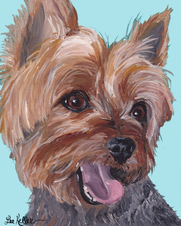 1000+ images about yorkie on Pinterest | Portrait