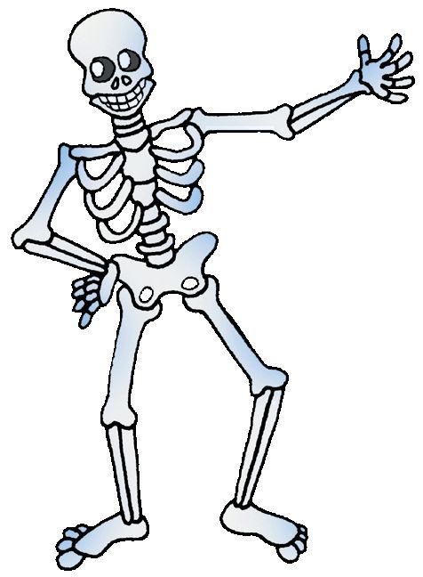 154 best skeletal system images on pinterest, Skeleton