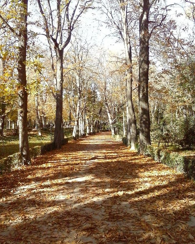 Thats the way ... ✌ . .  #lovely #madrid #spain #elretiropark #photo #instamoments #travel #weruntheworld #me #myself #happy #fuckinggoodlife #live #liveyourlife #love #photogram  #way #thastheway #autumn