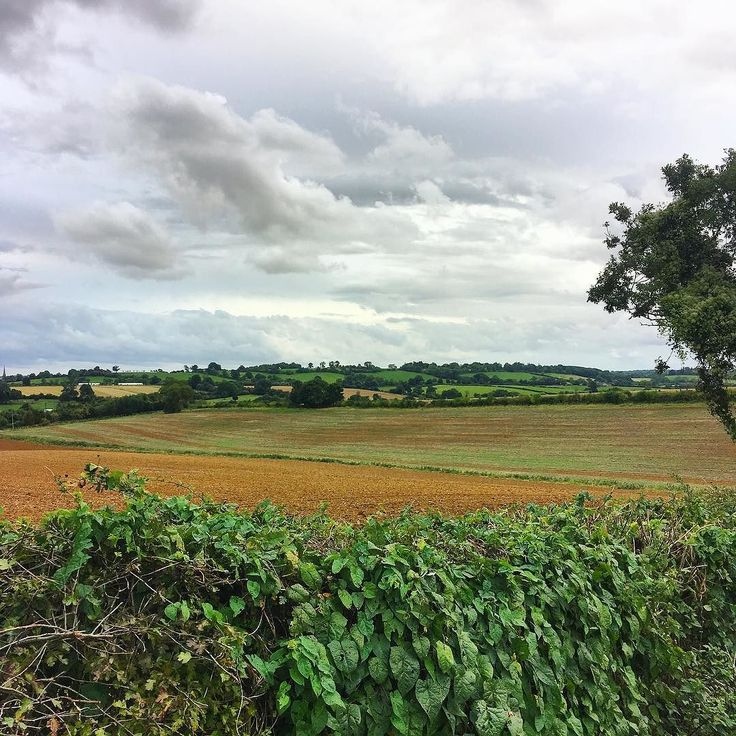 I posted on the blog today about getting out into the countryside and my recent stay near Saffron Walden. Since getting home I've been inspired to explore beyond the town centre and today's run took me out into the Oxfordshire countryside with these beautiful views all around. What the photo doesn't convey particularly well is the hills though - I wondered why I was feeling so tired until I looked around!! . . . . . #countryside #fields #farmland #oxfordshire #oxon #lovetheoutdoors…