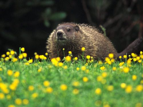 And Happy Groundhog Day to our friends from the USA!