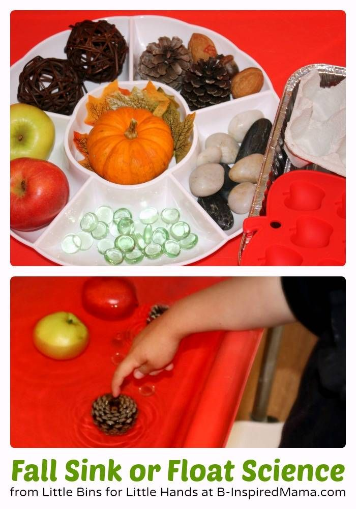 Fall Sink or Float Preschool Science Activity [Contributed by Little Bins for Little Hands]