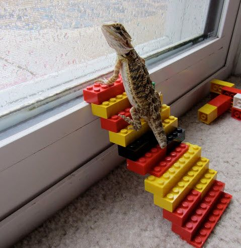DIY Lego Lizard Stairs - PetDIYs.com