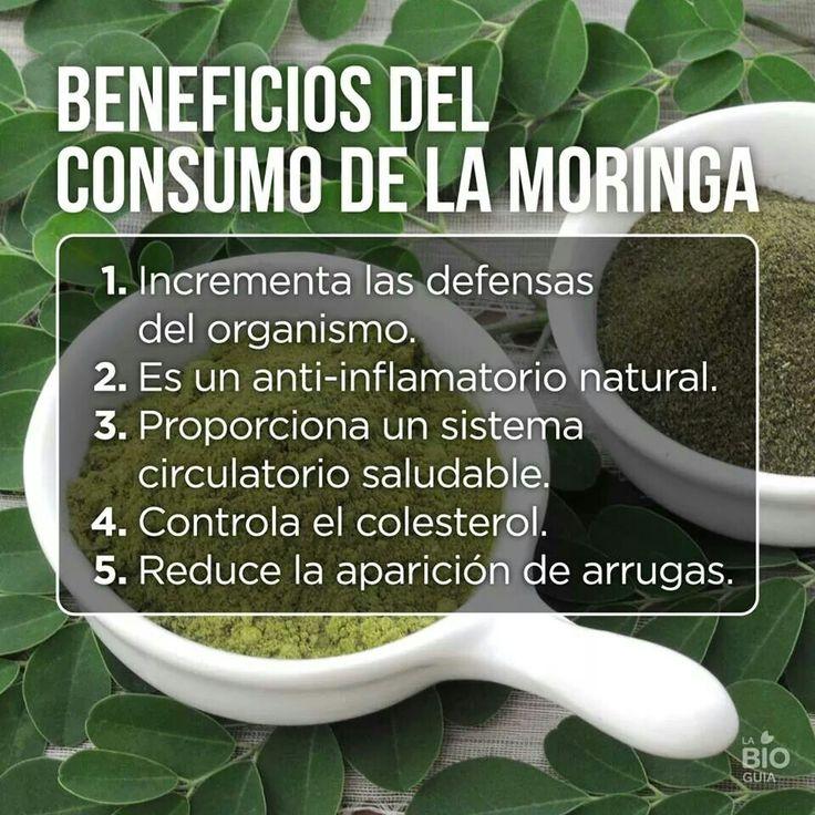 Beneficios de la Moringa