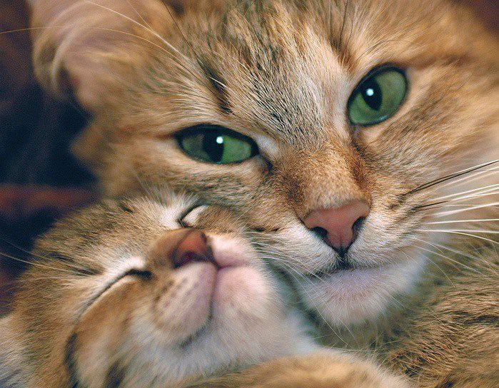 Mommy cat love