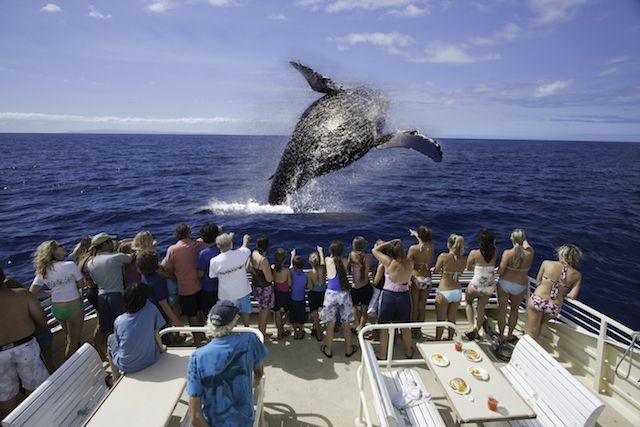5 Best Places to See the Winter Humpback Whale Migration