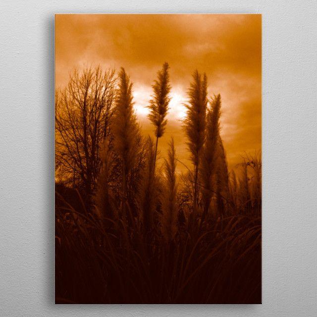 """Primordial"" #sepia #photography #Nature #Displate Metal Print Poster by Emily Pigou.  In 3 sizes: M-L-XL. Buy it from the @Displate store. #primordial #photooftheday #photographer #landscape #sepiafilter #filter #photo #love #life #igers  #art #artist #metalprint #print #shop #home #decor #gifts #landscape #tree #plant #winter #sunset #emilypigou #dark #gothic"