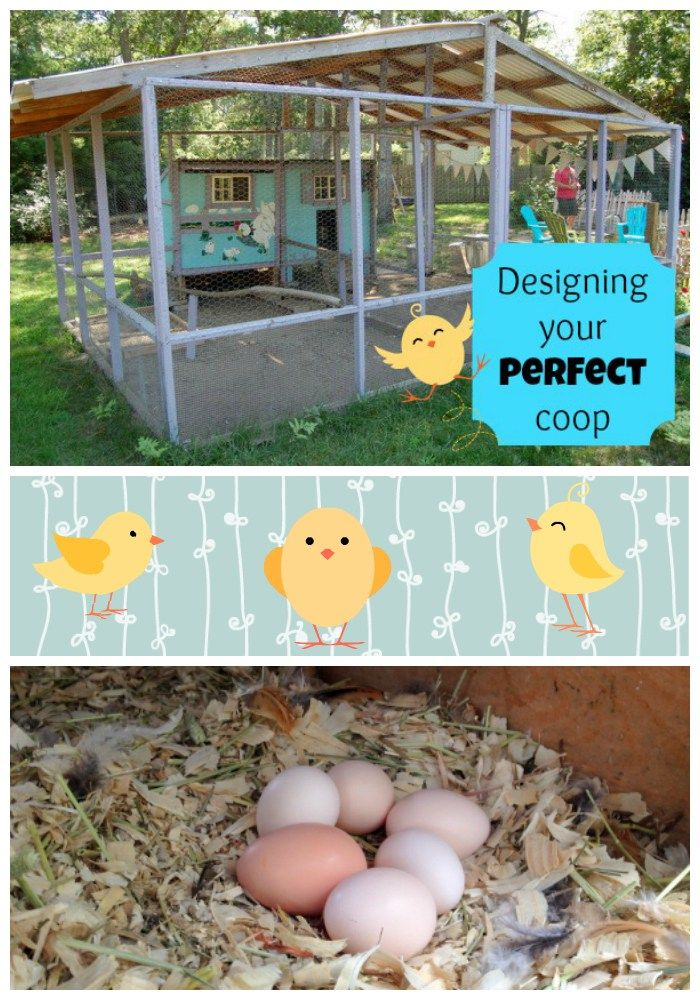 Designing Your Perfect Coop. Perfect ChickenKeeping ...