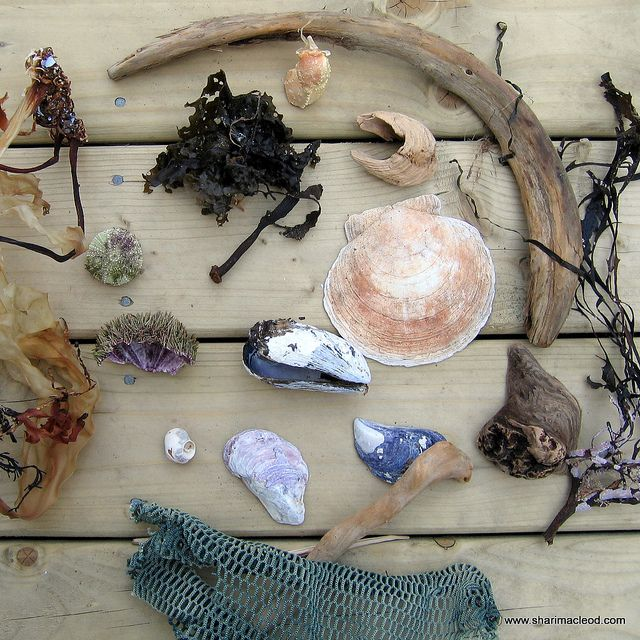 Beach Collection by Red Twig Brown Twig, via Flickr