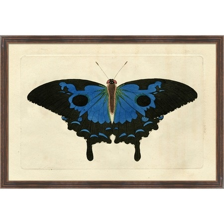 I pinned this Naturalist's Moth VIII Framed Print from the Wonder Wall event at Joss and Main!