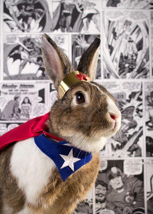 Super bunny to the rescue!