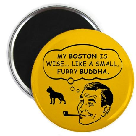 My Boston Terrier is wise Like a small furry Buddha: Spiritual Leader, Things Pugs, Leader Magnets, Boston Spiritual, Boston Terriers, Pugs Spiritual, True Stories, Buddha Pugs, Furry Buddha