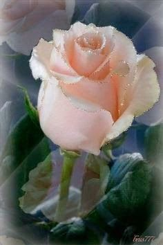 """""""La belleza en flor """" - Comunidade - Google+"""