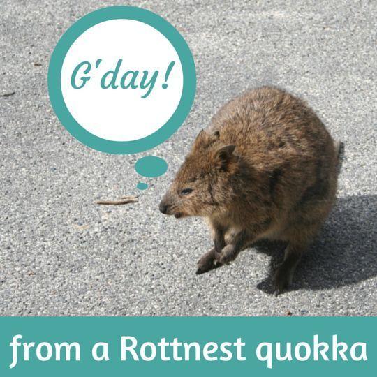 Seeing Quokkas on Rottnest Island, Western Australia