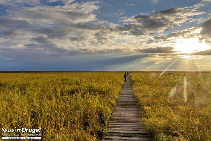 Poszukujemy najpiękniejszych widoków w Biebrzańskim Parku Narodowym
