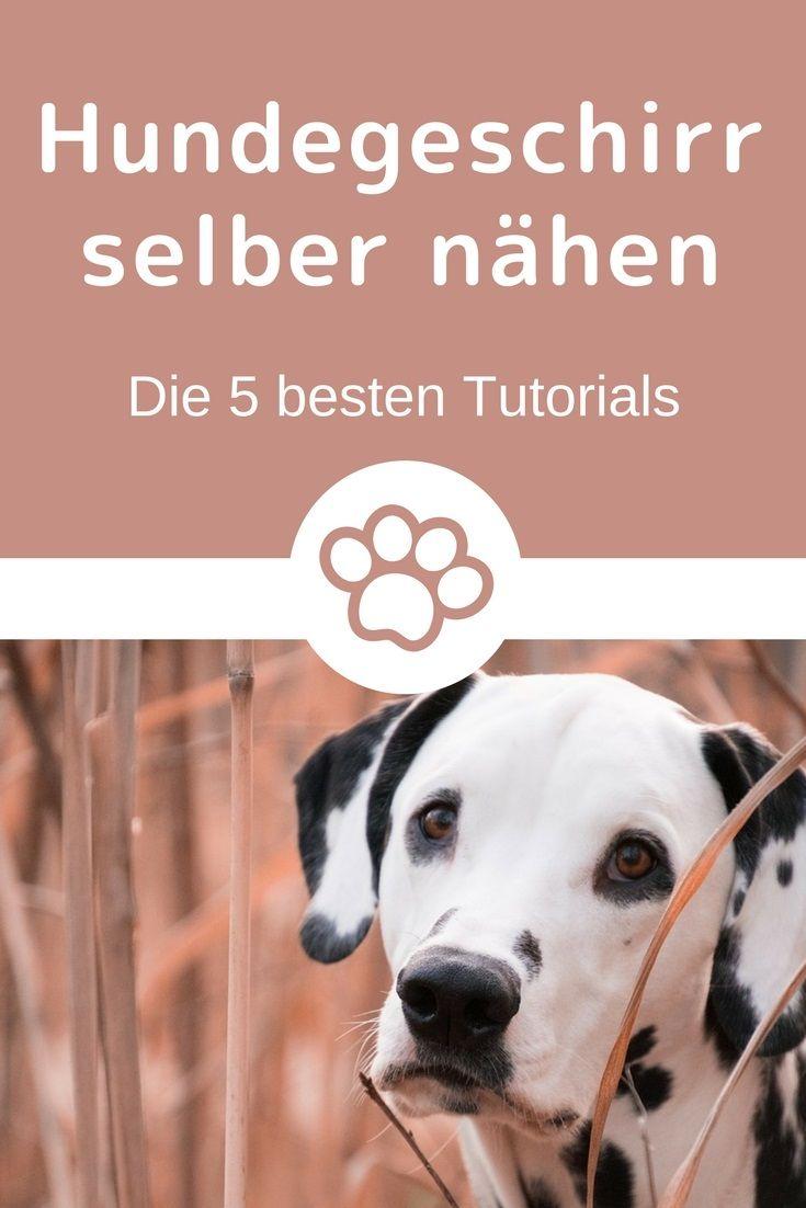 262 best DIY für Hund und Halter images on Pinterest | Hund zubehör ...