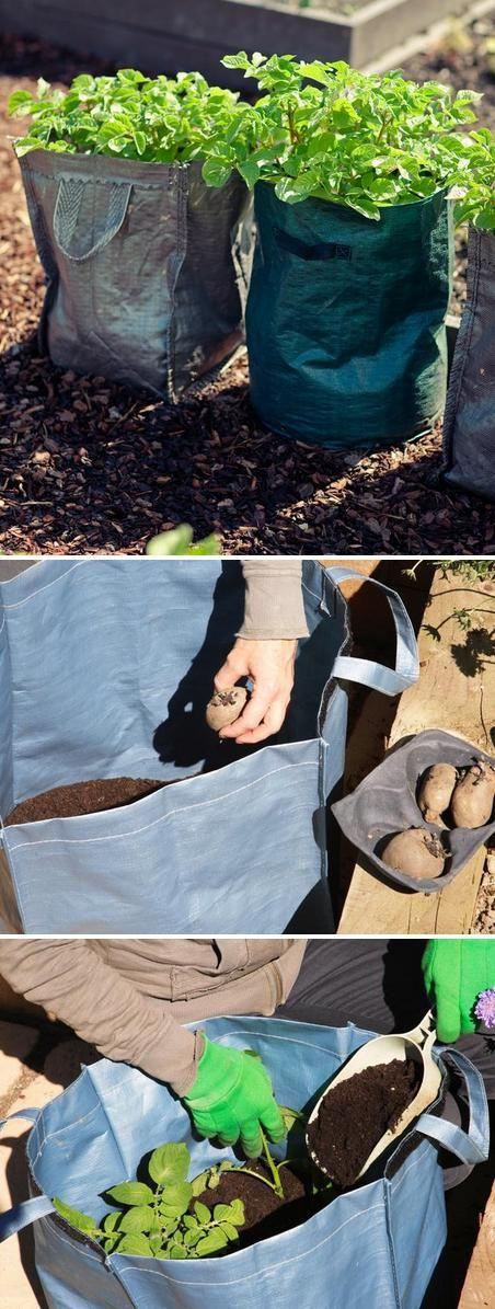 Grow potatoes in bags
