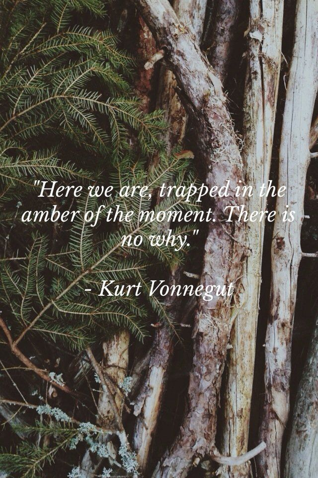 """""""Here we are, trapped in the amber of the moment. There is no why."""" Vonnegut"""