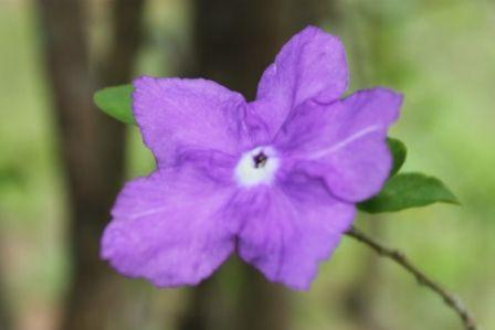 purpleflo
