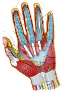 Vitamin B6 Pyridoxine for Trigger Finger....http://jeffreydachmd.com/2013/11/vitamin-b6-pyridoxine-trigger-finger/