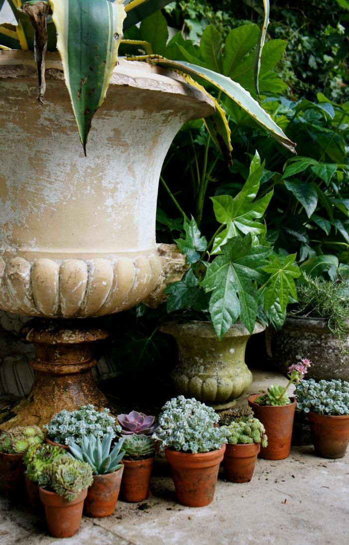 Beautiful back yard garden in London. With different scales of small succulents in terra cotta pots with large leafy plants in grand classical urns.