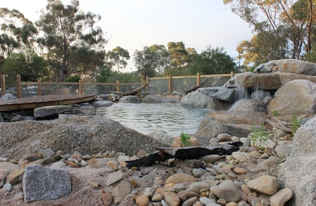 15 Best Images About Billabongs Natural Pools On Pinterest Gardens Green And Flats