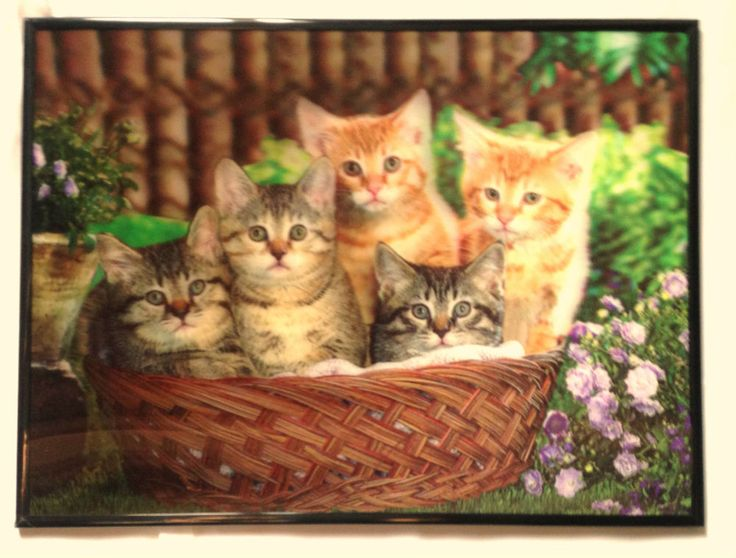 3D Lenticular Poster Framed Cats in a Basket