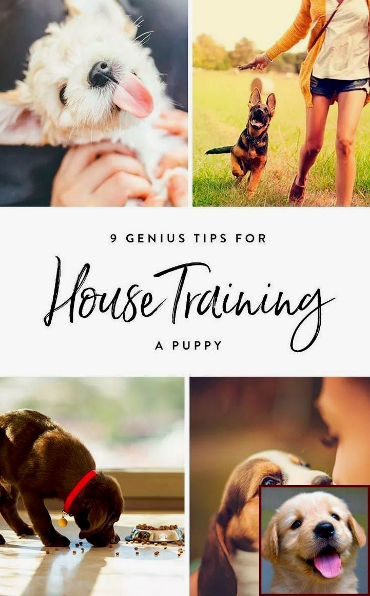House Training A Puppy Fast And Become A Dog Trainer Courses Uk