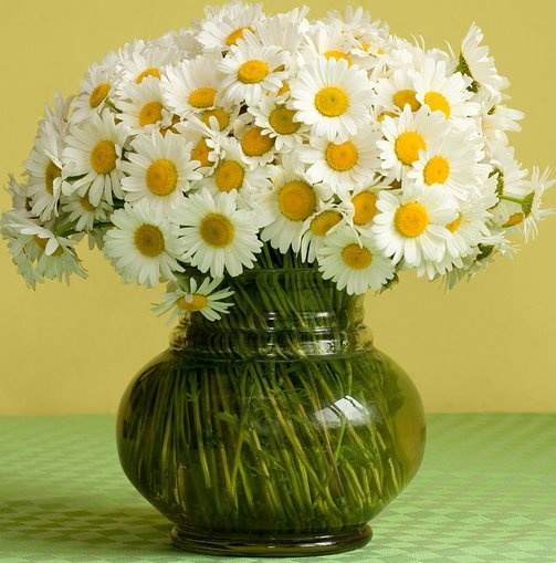 Vase of daisies...my fave!: Things Daisies, White Daisies, Favorite Flowers, Favorite Things, Wedding Flowers, Daisies Bouquets, Fresh Flowers, Arreglo Floral, Lil Daisies