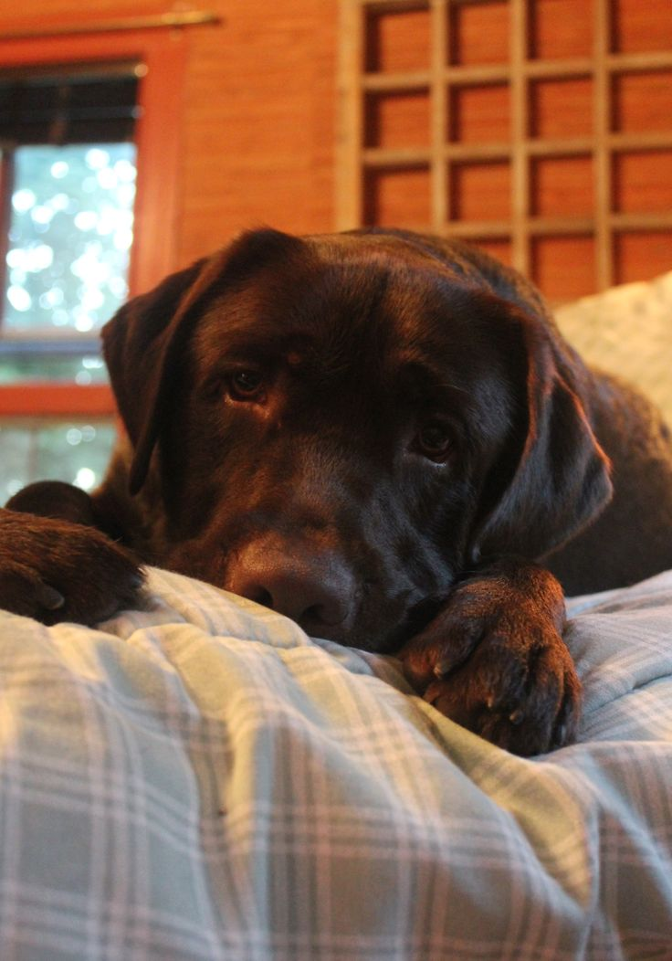 Bruin on my bed. How can anyone resist that look? And why would you??