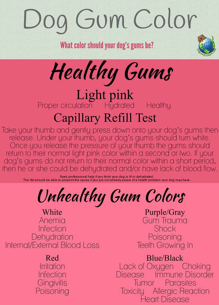Dogs Gums Pink And Black