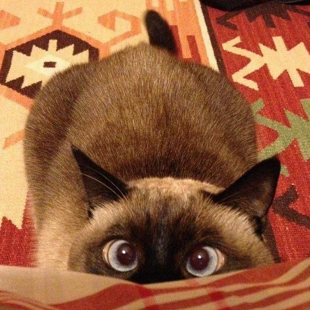 """Cat owners know what the """"crazy eyes"""" mean."""