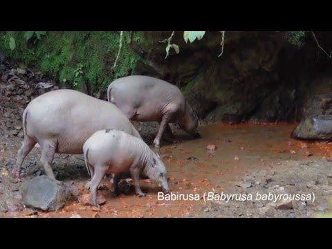 Taman Nasional Bogani Nani Wartabone Keunikan Ekologi di Gorontalo - Gorontalo